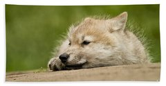 Arctic Wolf Pictures 1121 Beach Towel