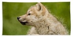 Arctic Wolf Pictures 1123 Beach Towel