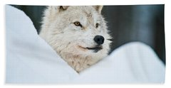 Arctic Wolf Pictures 1144 Beach Towel