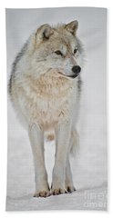Arctic Wolf Pictures 1146 Beach Towel