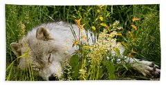 Arctic Wolf Pictures 151 Beach Towel