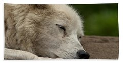 Arctic Wolf Pictures 155 Beach Towel