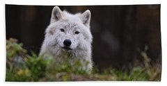 Arctic Wolf Pictures 208 Beach Towel