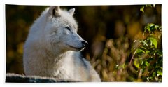 Arctic Wolf Pictures 246 Beach Towel