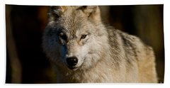 Arctic Wolf Pictures 247 Beach Towel