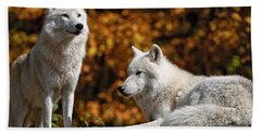 Arctic Wolf Pictures 34 Beach Towel