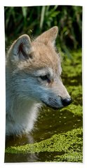 Arctic Wolf Pictures 349 Beach Towel