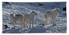 Arctic Wolf Pictures 374 Beach Towel