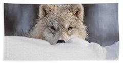 Arctic Wolf Pictures 417 Beach Towel