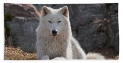Arctic Wolf Pictures 518 Beach Towel
