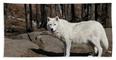 Arctic Wolf Pictures 512 Beach Towel