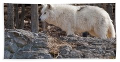 Arctic Wolf Pictures 525 Beach Towel