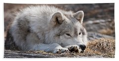Arctic Wolf Pictures 526 Beach Towel