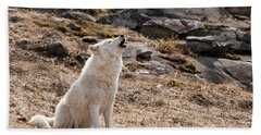 Arctic Wolf Pictures 535 Beach Towel