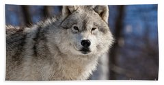 Arctic Wolf Pictures 550 Beach Towel