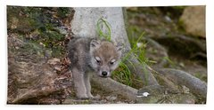 Arctic Wolf Pictures 562 Beach Towel
