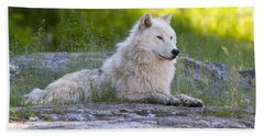 Arctic Wolf Pictures 628 Beach Towel