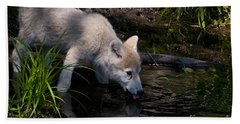 Arctic Wolf Pictures 667 Beach Towel