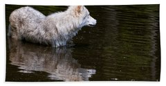 Arctic Wolf Pictures 672 Beach Towel