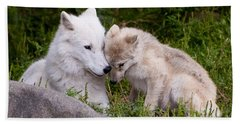 Arctic Wolf Pictures 702 Beach Towel