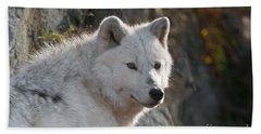 Arctic Wolf Pictures 718 Beach Towel