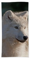 Arctic Wolf Pictures 727 Beach Towel