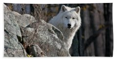 Arctic Wolf Pictures 734 Beach Towel