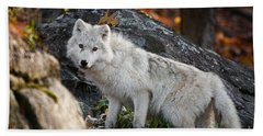 Arctic Wolf Pictures 737 Beach Towel