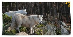 Arctic Wolf Pictures 744 Beach Towel