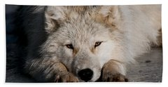 Arctic Wolf Pictures 752 Beach Towel