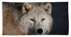 Arctic Wolf Pictures 755 Beach Towel