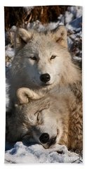 Arctic Wolf Pictures 787 Beach Towel