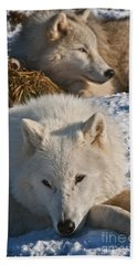Arctic Wolf Pictures 794 Beach Towel