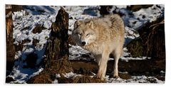 Arctic Wolf Pictures 807 Beach Towel