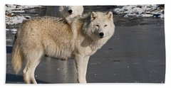 Arctic Wolf Pictures 812 Beach Towel