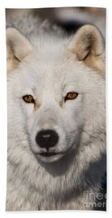 Arctic Wolf Pictures 814 Beach Towel