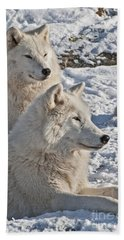 Arctic Wolf Pictures 830 Beach Towel