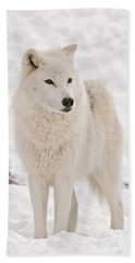 Arctic Wolf Pictures 844 Beach Towel