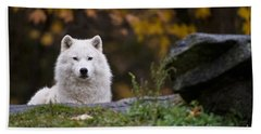 Arctic Wolf Pictures 913 Beach Towel
