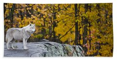 Arctic Wolf Pictures 919 Beach Towel