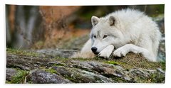 Arctic Wolf Pictures 986 Beach Towel