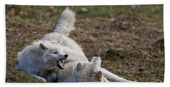 Arctic Wolf Pictures 996 Beach Towel