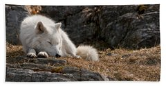 Arctic Wolf Pictures 519 Beach Towel