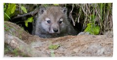Arctic Wolf Pup Pictures  Beach Towel