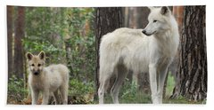 Arctic Wolf With Pup, Canis Lupus Albus Beach Towel