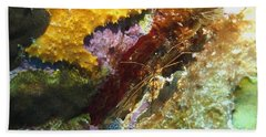 Arrow Crab In A Rainbow Of Coral Beach Towel by Amy McDaniel
