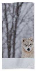 Artic Wolf Pup Beach Towel