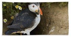 Atlantic Puffin At Burrow Skomer Island Beach Towel by Sebastian Kennerknecht