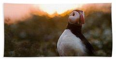 Atlantic Puffin At Sunrise Skomer Beach Towel by Sebastian Kennerknecht