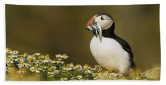 Atlantic Puffin Carrying Fish Skomer Beach Towel